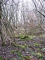 Woodland, Head of Muir - geograph.org.uk - 335946.jpg