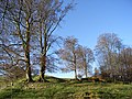 Woodland, Martinsell Hill - geograph.org.uk - 282565.jpg