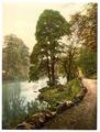Woods, Bolton Abbey, England-LCCN2002696401.tif