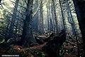 Woods - panoramio (5).jpg