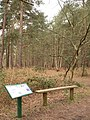 Woods on Sutton Common with infoboard - geograph.org.uk - 374754.jpg