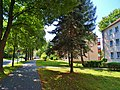 Zehistaer Straße, Pirna 123362116.jpg