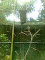 Zoo Dois Irmãos by SandraSB (3).jpg