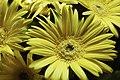 ++Backyard Flowers Yellow.jpg