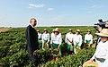 """İlham Əliyev Lənkəranda """"Astaraçay"""" MMC-nin çay plantasiyalarına baxarkən 07.jpg"""