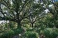 Андріївський ліс 16.jpg