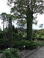 Ботанічний сад ДНУ 2.JPG