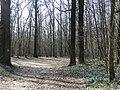 Весенний парк - panoramio (1).jpg