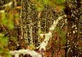 В лесной чаще.jpg