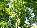 Графський парк (парк Ніжинського педінституту), Ніжинський район, м. Ніжин 74-104-5004 30.JPG