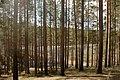 Гряда Вярямянселькя, Одно из Дубовых озер подо льдом.jpg