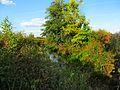 Двуреченский ручей. - panoramio.jpg