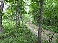 Дорога на перевале - panoramio (1).jpg