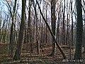 Еталонна діброва Вінницьке лісництво 9.jpg