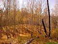 Золотая осень - panoramio (10).jpg