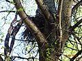 Лесной житель ... - panoramio.jpg