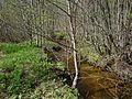 Лесной ручей - panoramio (1).jpg