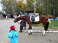 """Лошадь в парке """"Швейцария"""" готова покатать детишек.JPG"""