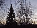 Осенний закат на дачном участке.jpg