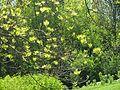 Парк «Слави» IMG 6569.jpg