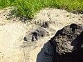 Петроглифы Сикачи-Аляна верхняя группа лежащая маска ф2.JPG