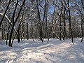 Украина, Киев - Голосеевский лес 162.jpg