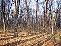 Украина, Киев - Голосеевский лес 226.JPG
