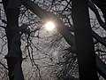 Украина, Киев - Голосеевский лес 23.jpg