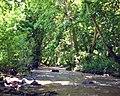 Սոսու պուրակը Ծավ (Բասութագետ) գետի ափին.jpg