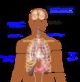 الأعراض الرئيسية للسكري.PNG