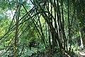 লাউয়াছড়া জাতীয় উদ্যান 08.jpg