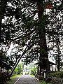 仁科神明宮-28.jpg