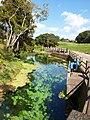 小池水源 KOIKE Spring water - panoramio.jpg