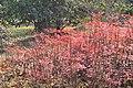 金银湖公园 - panoramio (8).jpg