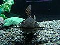 鯰魚001.JPG