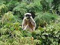 ... monkey (3130939448).jpg