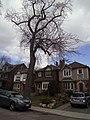 121 Albany Ave Annex Toronto.jpg