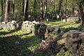 1470viki Cmentarz żydowski przy ul. Lotniczej. Foto Barbara Maliszewska.jpg
