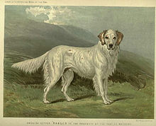 historical (1881) breed picture