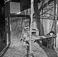 1969 Jardins ouvriers au CNRA-10-cliche Jean Weber.jpg