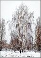 1 Парк Муромець взимку.jpg