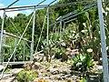 2008 07 Botanical Garden Meran 71500R0376.jpg