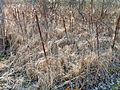 2012-03-01 15-00-08-site-plutons-barbeles.jpg