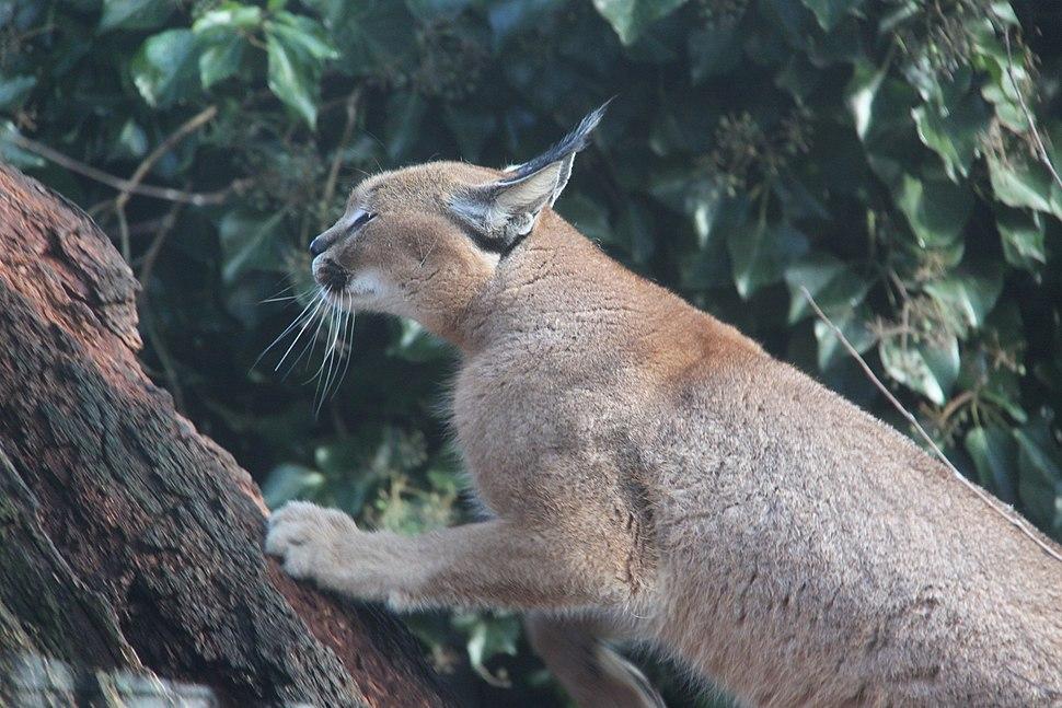 20120219 Olmense Zoo (64)