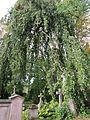 20121016Friedhof St Johann3.jpg