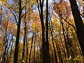 2014-10-30 12 48 06 Trees during autumn in the woodlands along the West Branch Shabakunk Creek in Ewing, New Jersey.JPG