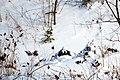 2014.1.8 육군 특전사 설한지 극복 훈련 The Cold Weather Traning of ROK Army Special Warfare Force (11867199365).jpg