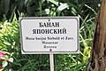 2014 Suchum, Ogród botaniczny (04).jpg