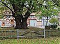 2015-10-24 Dorflinde in Neuenstein-Aua (Hessen) 01.jpg