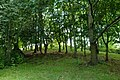 2015 London-Woolwich, Green Hill-Repository Woods 1.JPG